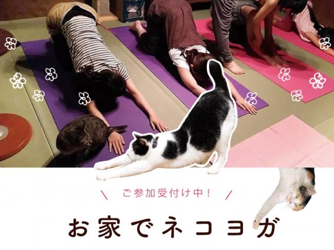 ネコを愛で放題のヨガ教室「オンラインネコヨガ」開講